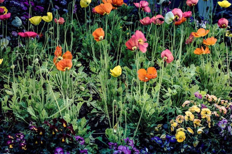 Bergamo, Italy April 16, 2016. Flower bed on the street with pan stock photography