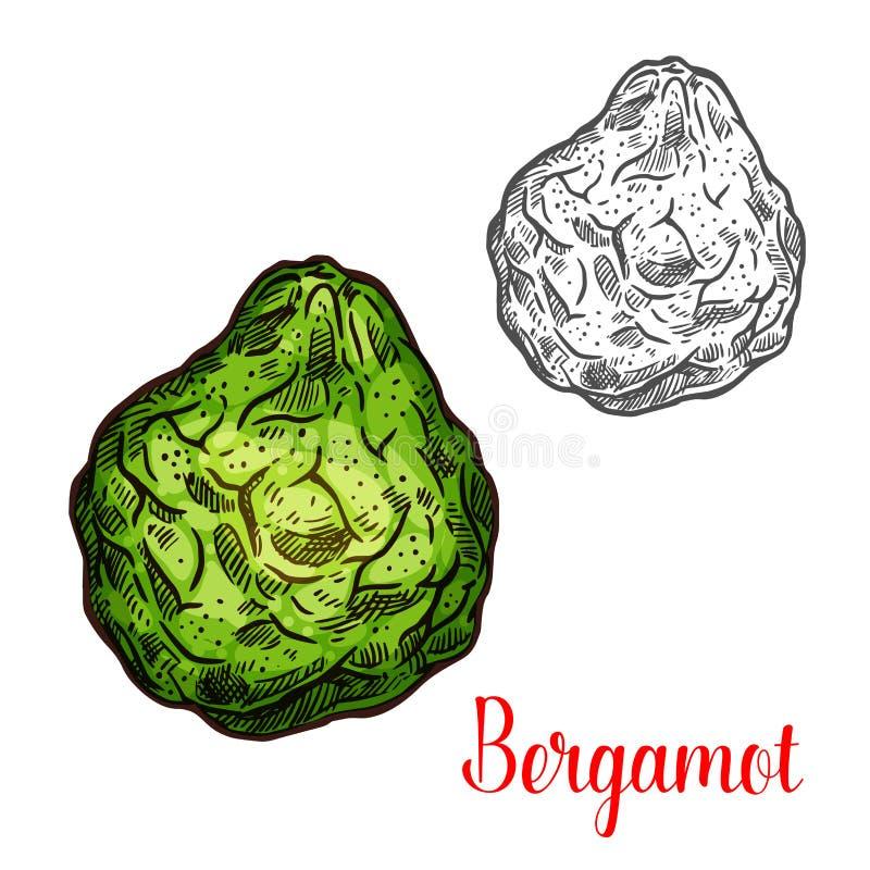 Exotic fruit bergamot vector icon stock illustration