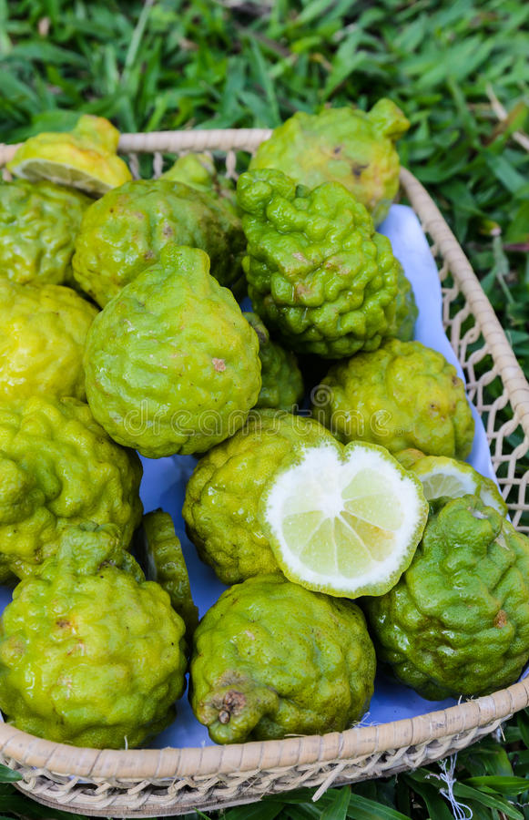 The bergamot. Fruit group in basket royalty free stock images