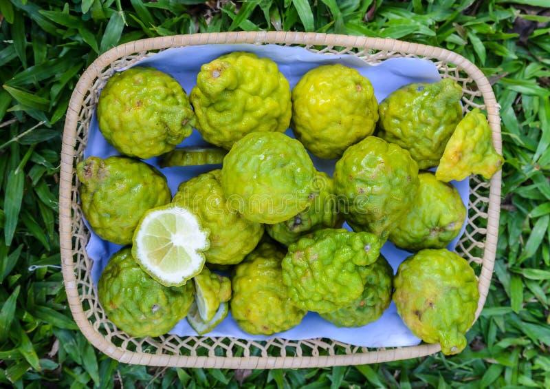 The bergamot. Fruit group in basket stock photos