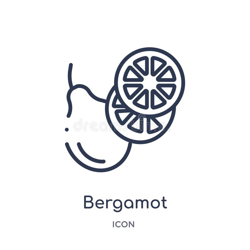 Bergamot icon from nature outline collection. Thin line bergamot icon isolated on white background. Icon royalty free illustration