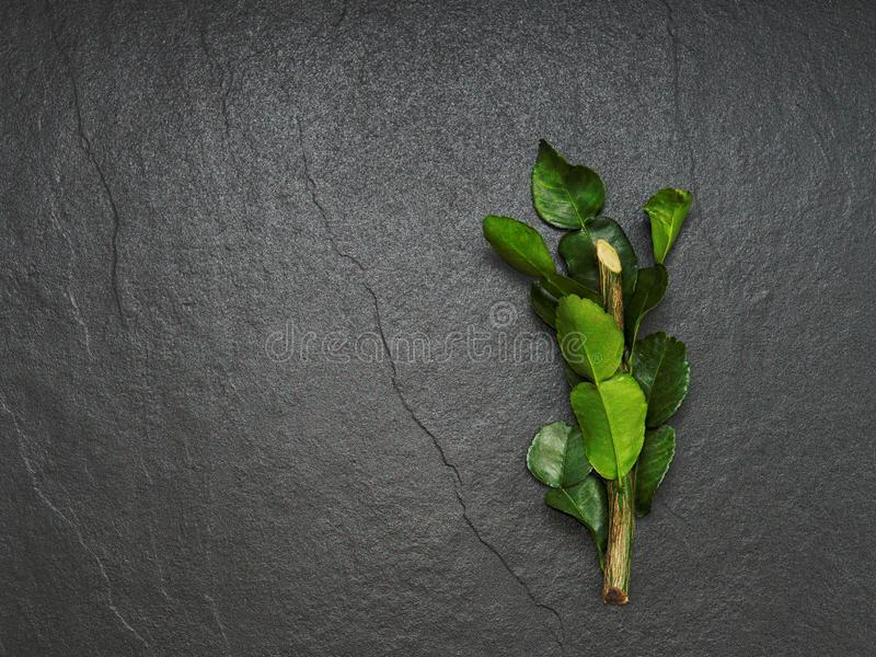 Bergamot, kaffir lime and kaffir lime leaf with branch on dark background stock photos