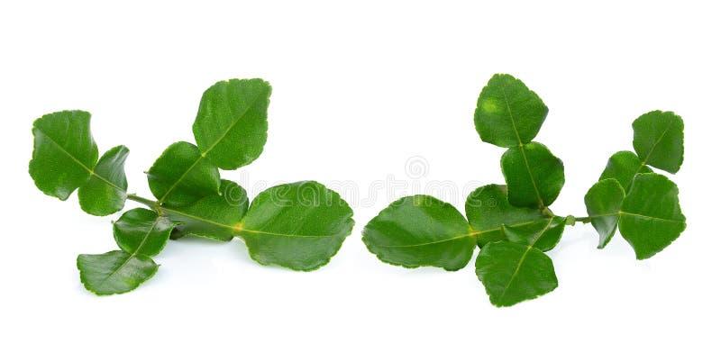 Bergamot leaf isolated on white stock image