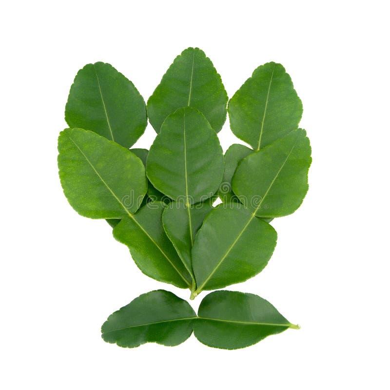 Bergamot leaves. Bergamot leaves isolated on white background royalty free stock image