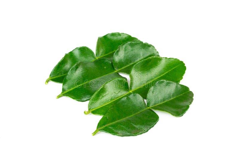Bergamot leaves isolated on a white background stock photos