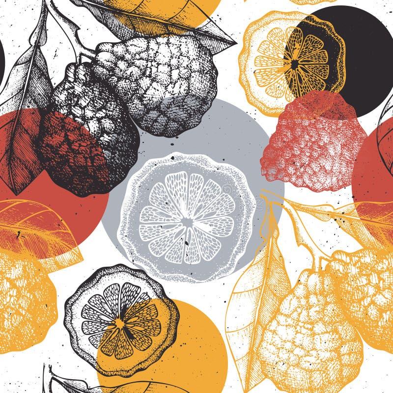 Citrus seamless pattern. Bergamot background. Vector fruit illustration. Summer drawing for logo, icon, label, packaging design. stock illustration