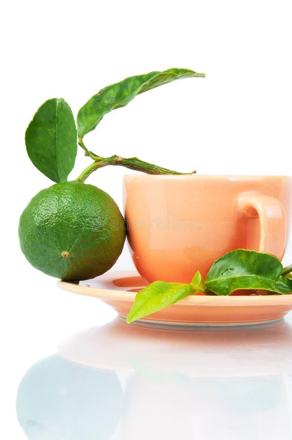 Download Bergamot tea stock photo. Image of branch, herbal, closeup - 17510348