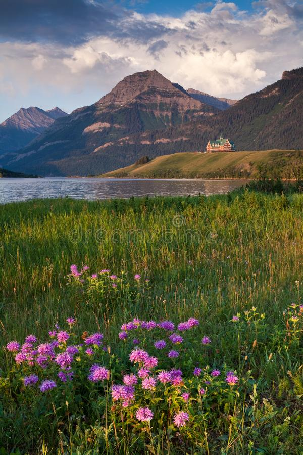 Bergamota selvagem e o hotel do príncipe de Gales no parque nacional dos lagos Waterton fotos de stock
