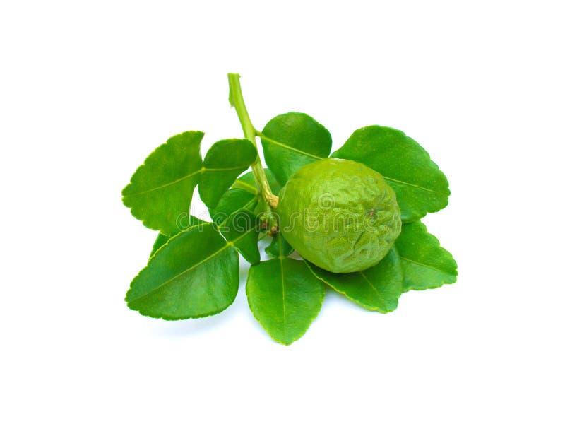 Bergamota z zielenią rozgałęzia się na bielu obraz royalty free