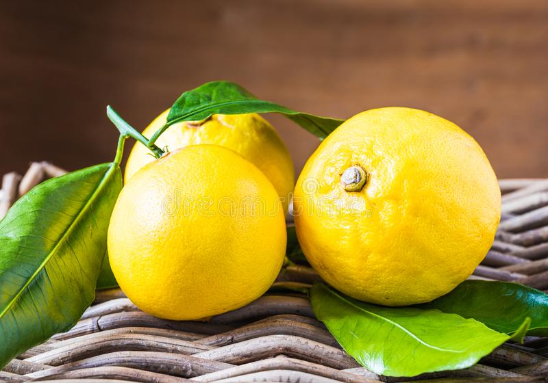 BergamottenZitrusfrucht aus Süd-Italien, Reggio Calabria stockbild