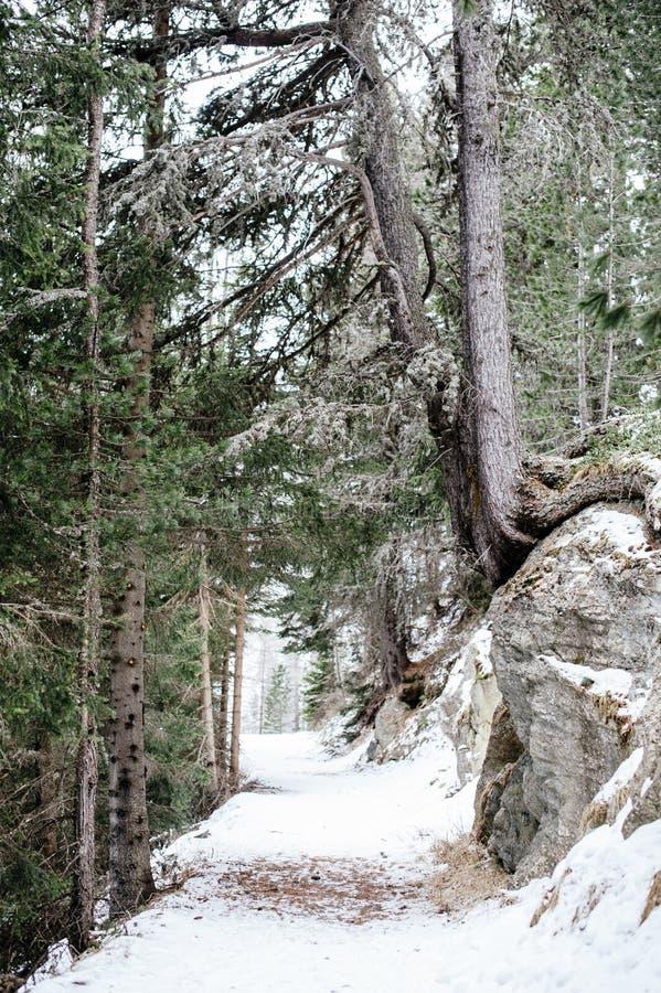 Bergbana i den snöig skogen royaltyfri bild