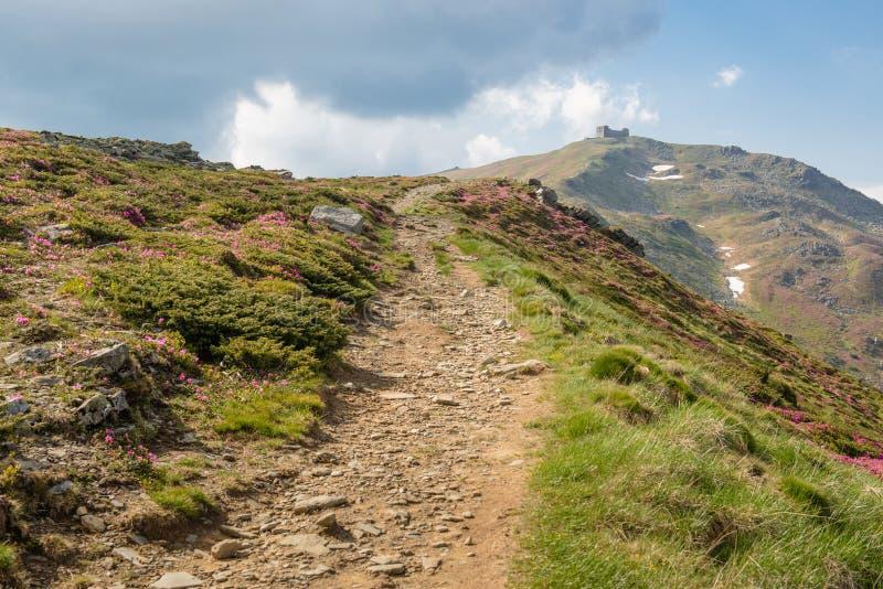 Bergbana till och med den blommande rhododendrondalen till Pip Ivan M royaltyfri foto