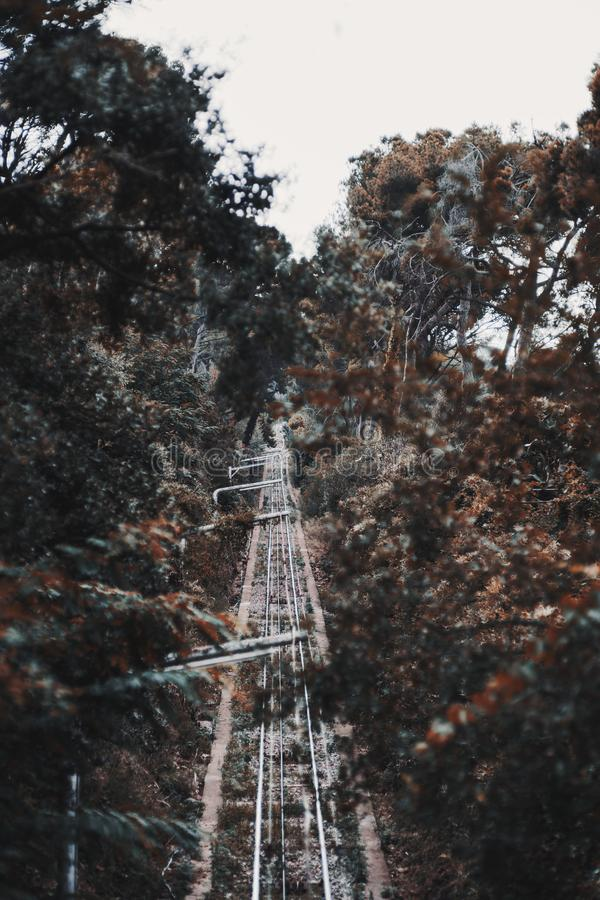 Bergbanaspår i en skog royaltyfri bild