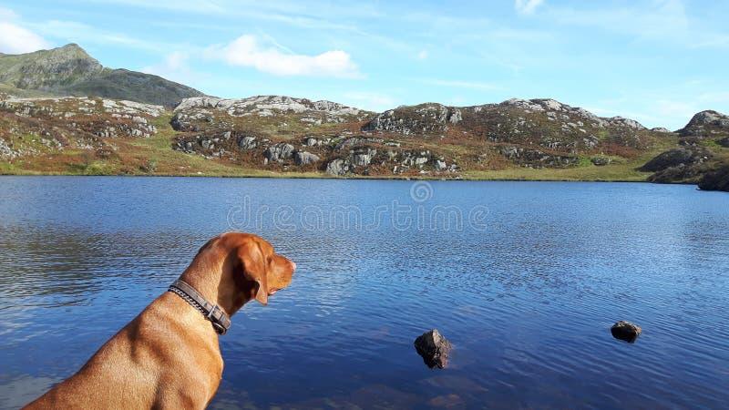 Bergblick mit Hund stockfoto