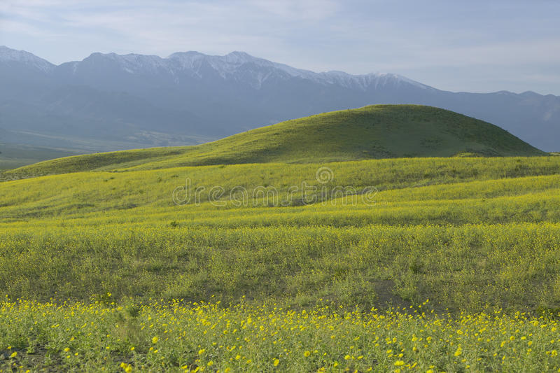 Bergblick und großartiger Wüstengold- und verschiedenerfrühling blüht südlich des Ofen-Nebenflusses in Nationalpark Death Valley, lizenzfreie stockfotos