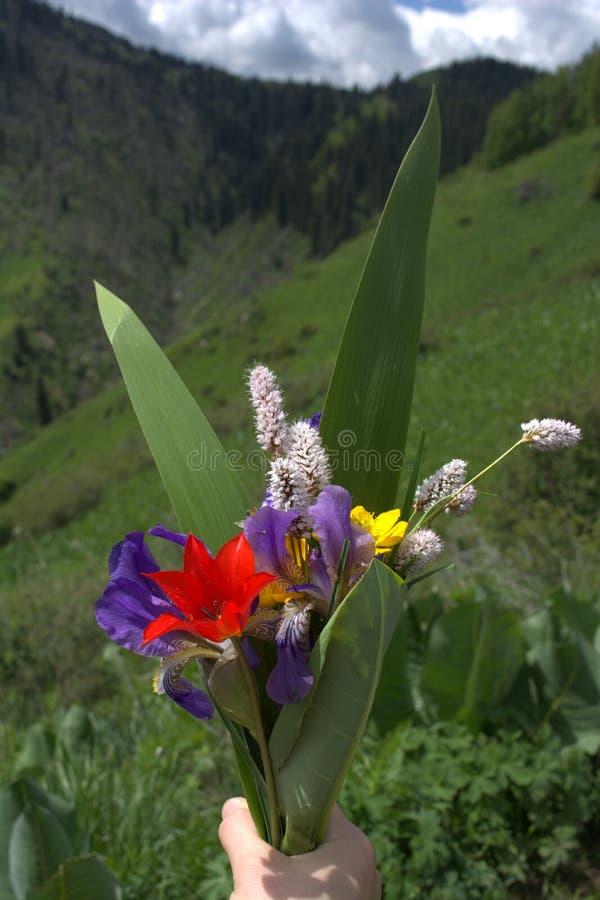 Bergbloemen royalty-vrije stock afbeeldingen