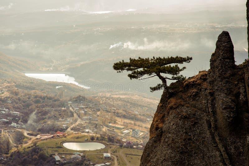 Bergboom op de achtergrond van uitloperdorp Demerdzhi, de Krim royalty-vrije stock foto's