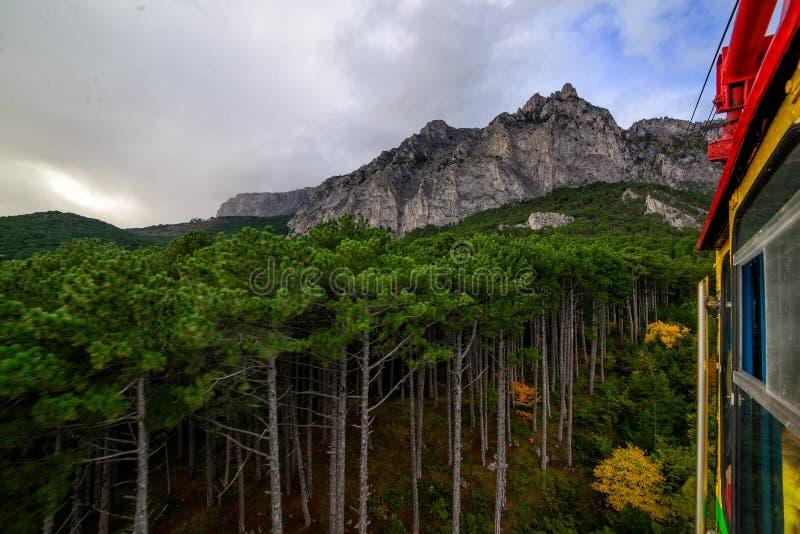 Bergbos bovenop een berg in de Krim royalty-vrije stock afbeelding