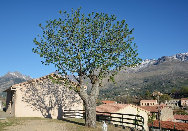 Bergby Casamaccioli i mitt av Korsika royaltyfri bild