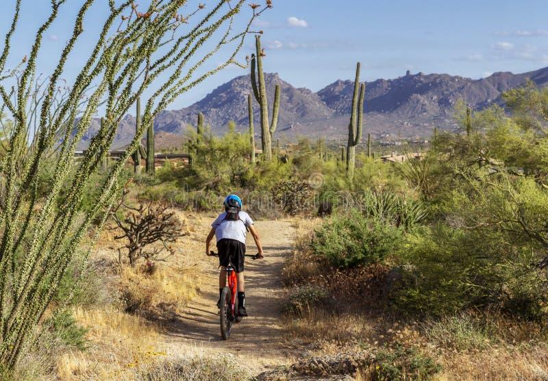 Bergcyklist på ökenslinga med kaktuns royaltyfri foto