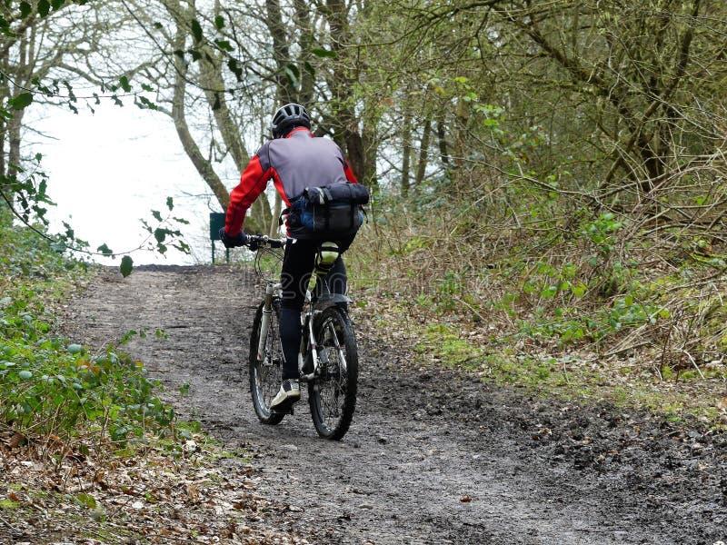 Bergcyklist på skogsmarkbanan arkivfoto
