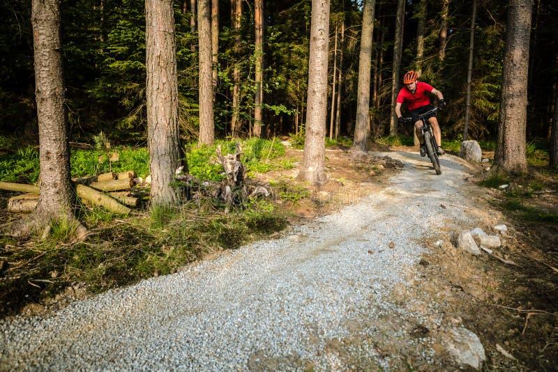 Bergcyklistridning som cyklar i sommarskog arkivbild