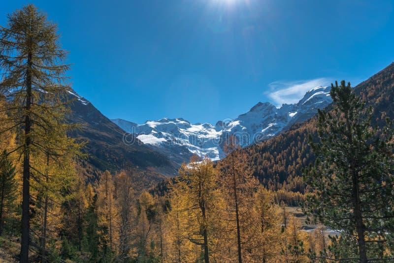 Bergdal i de schweiziska fjällängarna med skogen i nedgångfärger och snöig maxima royaltyfria bilder