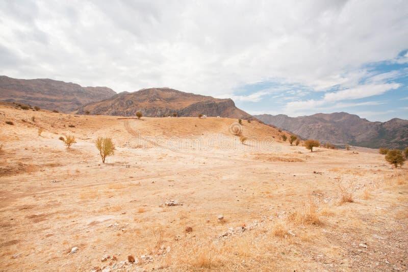Bergdal med de torra träden och sandigt landskap i Mellanösten royaltyfria bilder