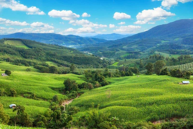 Bergdal under soluppgång landscape den naturliga sommaren royaltyfri fotografi