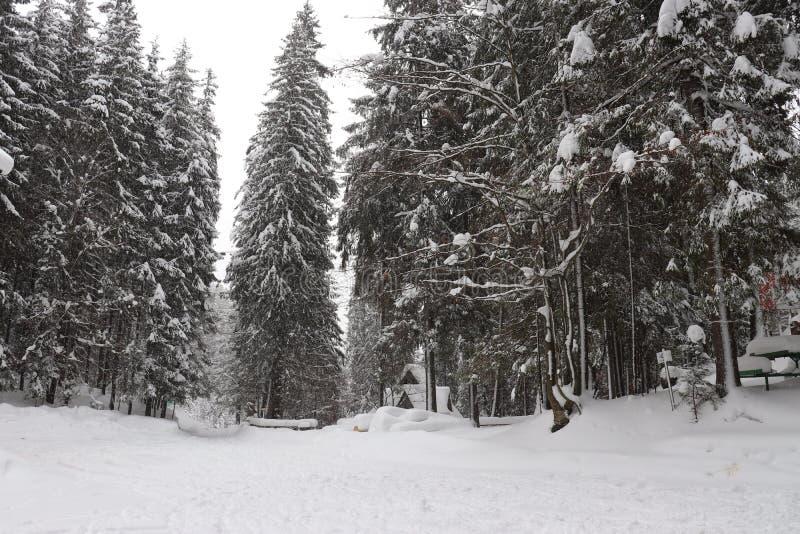 Berge Karpaten See Synevir stockbilder