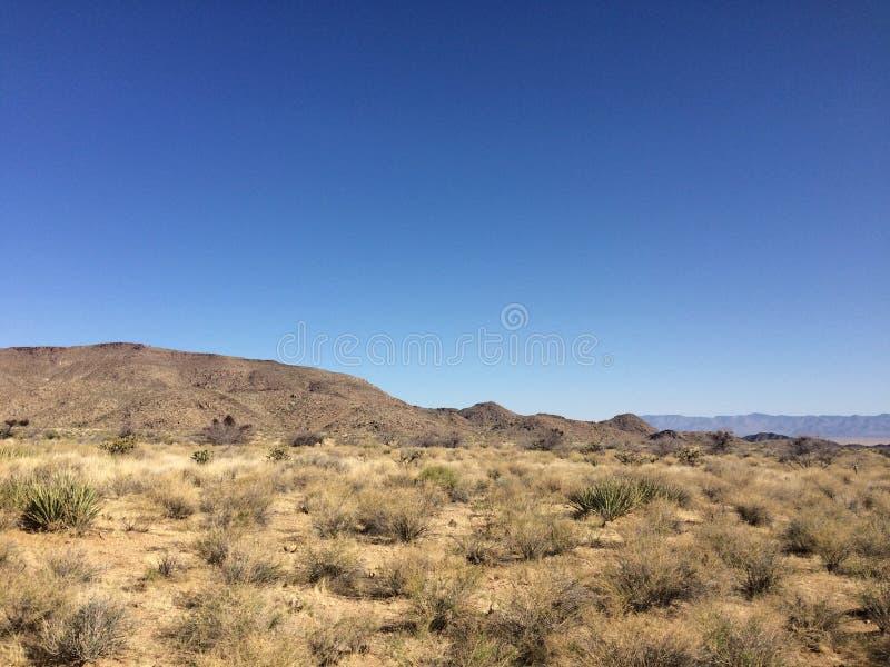 Berge und Kakteen im Arizona verlassen unter dem blauen Himmel lizenzfreies stockfoto