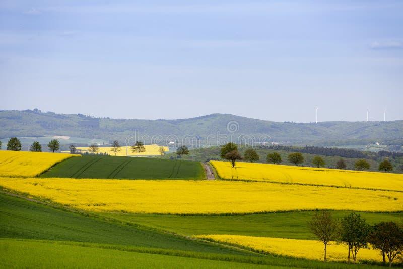 Berge und Rapssamenfelder im Frühjahr in Deutschland stockfotografie