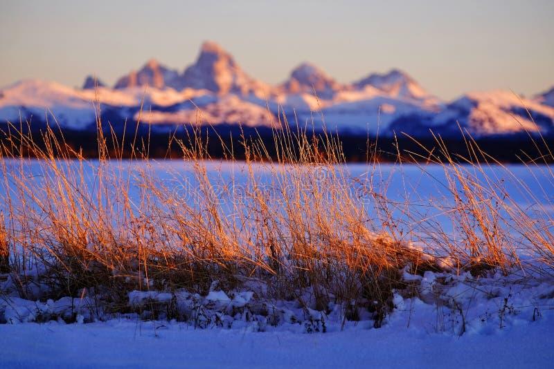Berge wildes Gras-Unkraut-Sonnenuntergang Tetons Teton im Hintergrund Bea lizenzfreies stockfoto