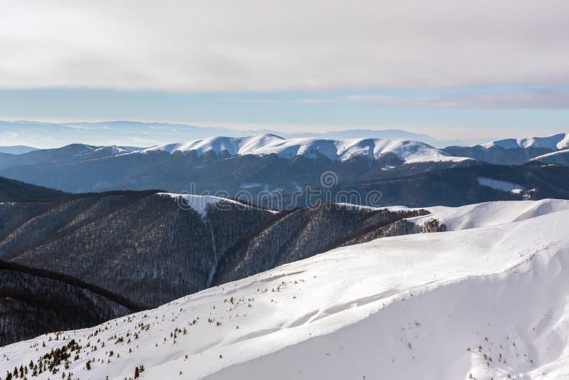 Bergen in de Karpaten royalty-vrije stock fotografie