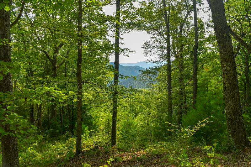 Bergen die door bomen gluren stock foto's