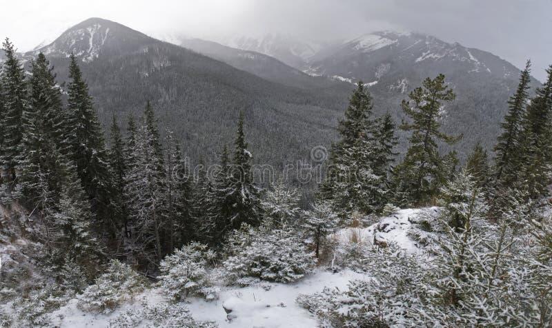 Bergen die met sneeuw worden behandeld stock afbeeldingen