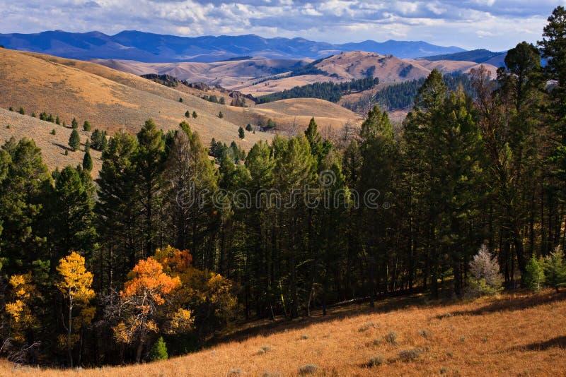 Bergen en Bos langs Lemhi Pas, Montana stock afbeeldingen