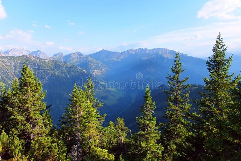 Bergen en bos in Liechenstein stock foto