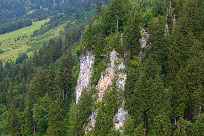 Bergen en bossen royalty-vrije stock afbeelding