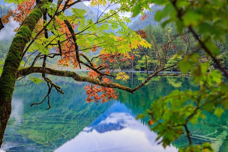 Bergen en bossen stock afbeeldingen