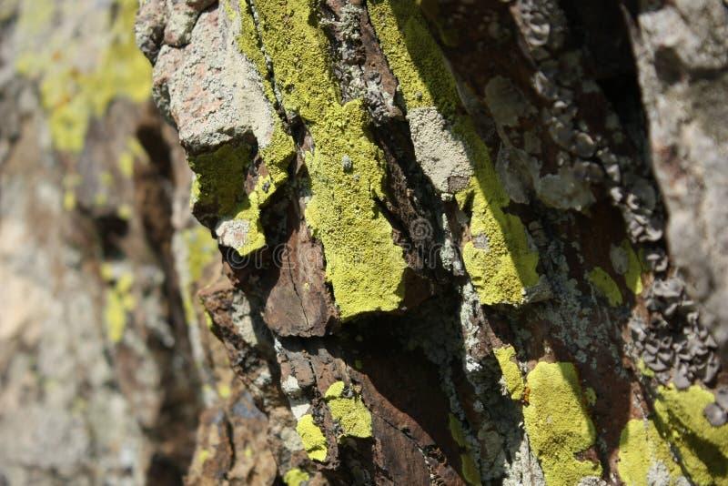 Bergen en mos stock afbeeldingen