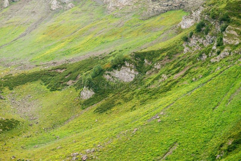 Bergen met Alpiene Weiden in Sotchi royalty-vrije stock foto