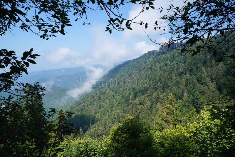 Bergen met naald en loofbomen worden behandeld, en wolk die royalty-vrije stock foto