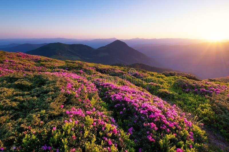 Bergen tijdens bloemenbloesem en zonsopgang stock foto's