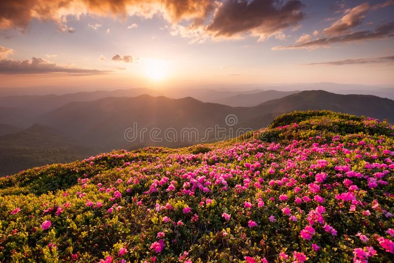 Bergen tijdens bloemenbloesem en zonsopgang stock afbeelding
