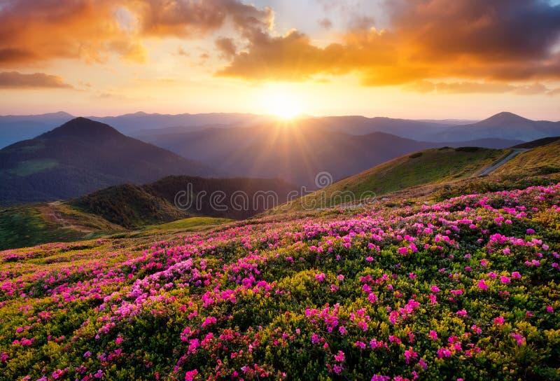 Bergen tijdens bloemenbloesem en zonsopgang royalty-vrije stock afbeelding