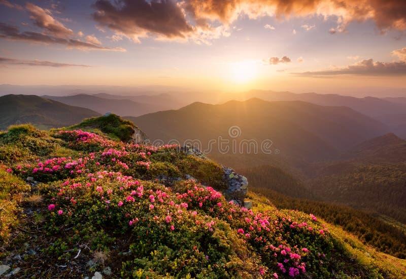 Bergen tijdens bloemenbloesem en zonsopgang royalty-vrije stock afbeeldingen