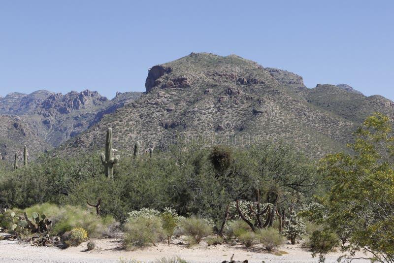 Bergen in Tucson, Arizona royalty-vrije stock afbeeldingen