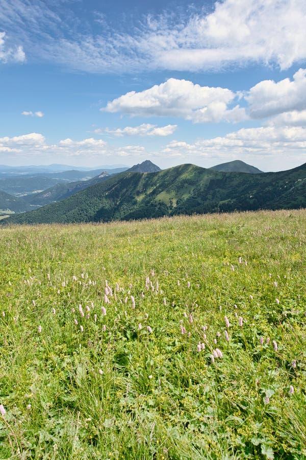 Bergen in Weinig Fatra, Slowakije stock foto