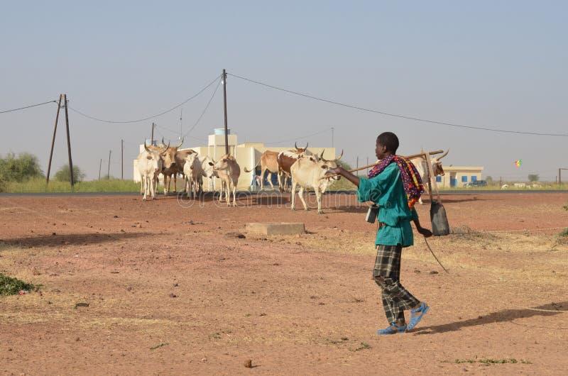 berger africain photographie stock libre de droits